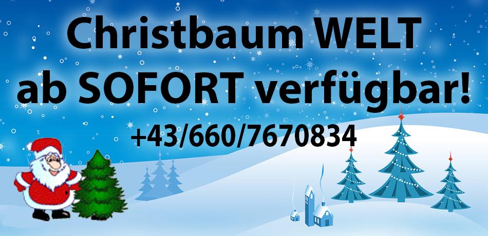 Christbäume & Weihnachstbäume in Alpbach in Tirol